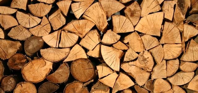 Template 2: Modul 2 der staatlichen Forstprüfung